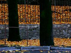 Autunno urbano (Ola55) Tags: autumn italy autunno distillery italians magicalmoments aplusphoto fdream worldtrekker yourcountry ola55