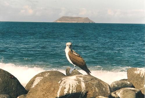 Galapagos-Seymour Nord (1)