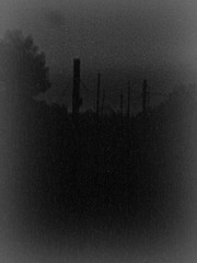 nel nulla (dis[ o ]rient'express [I'm not there]) Tags: night mmm della pali nebbia notte luce nella nelnulla disorientexpress photofeeling sultettodellaterradeisogni blackintothewhite