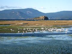 BG Guests - Lopez Island -83 (Meggy Cline) Tags: bulgarian