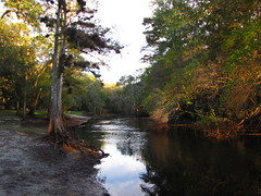 Withlacoochee River at Hog Island