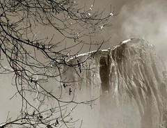 Through the cloud (lienhp) Tags: winter mountain snow cold tree nature nationalpark branches