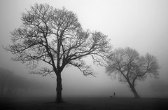 3.15 . (Chrisconphoto) Tags: trees mist cold sherdleypark