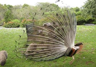 Birding in Kenya, Bird Watchers in East Africa
