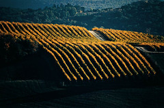 vineyards (Logbook-fine art) Tags: vineyards italiy tuscany chianti countryside campagna atumn landscape