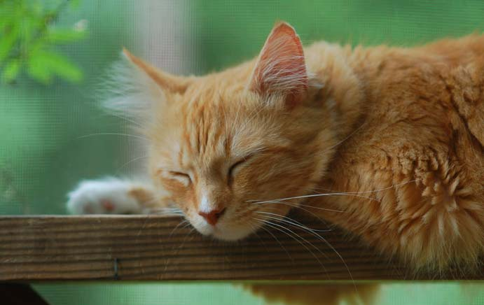 Soren Sleeping