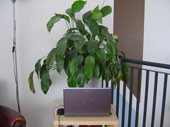 Our plant has internet (ponylipjes) Tags: plant vaio