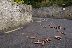 Rotten carrots. (LiamCH) Tags: wales britain carrots rotten hayonwye mouldy