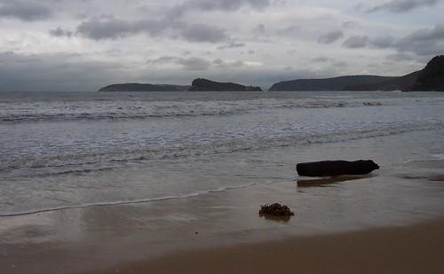 Lion Island fron Umina Beach