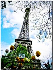 Invasione Vegetale (Mizarin) Tags: sky paris flower tree alberi clouds nuvole torre eiffel barbara cielo toureiffel torreeiffel parigi bassi tulipani mizarin invasionevegetale