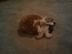 Stuffed Bunny on Bunny