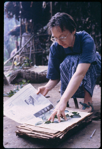 pressing plants in the Ituri