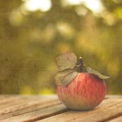 An apple a day... ~ Day 60 ~ (bynini [slightly away]) Tags: wood autumn light food sun fall texture apple fruits fruit garden 50mm wooden bokeh terrace herbst harvest naturallight veranda 18 holz frucht garten apfel terasse frchte anappleadaykeepsthedoctoraway natrlicheslicht