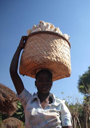 Climate change models find maize