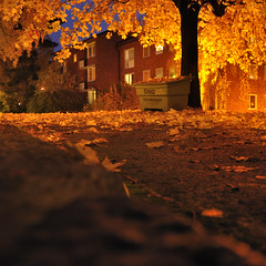 Autumn Eve (~ Maria ~) Tags: longexposure autumn light tree fall yellow evening maple sandbox