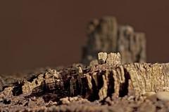 The landscape (egefan - Suzan Almond) Tags: rotting garden landscape log dof alien shallow img3521 50mm18canon