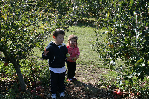 Apple Picking in November
