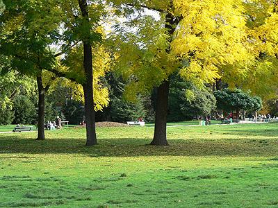 arbres en automne.jpg