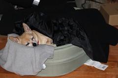 Cha Cha Sleeping