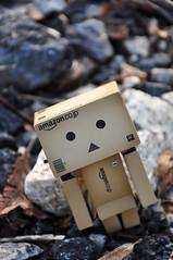 Danbo said: I wanna go outside,,! (Flyingdreamz a.k.a. Antevaxis) Tags: toys danbo revoltech danboard