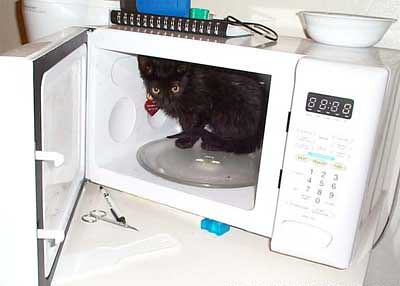 microwave_cat by you.