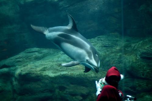 Dolphin and Santa