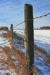 Standing Strong (gfpeck) Tags: winter fence landscape best northdakota week prairie photoshopelements activeassignmentweekly bestofweek1 bestofweek2 bestofweek3 bestofweek4 bestofweek5 bestofweek6