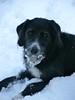 "Pelle.. sulla neve ("" paolo ammannati "") Tags: natura neve toscana animali verna effettinaturali fotoconneve"