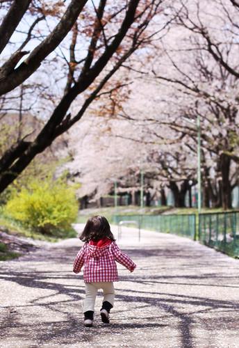 Sakura -1