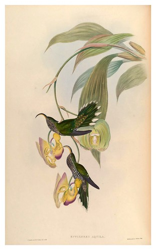 001-An introduction to the Trochilidae or family of humming-birds-Vol 1- 1861-John Gould