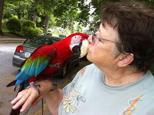 Macaw kisses