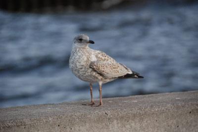 canal bird