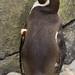 Woodland Park Zoo Seattle 059