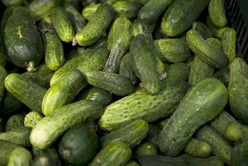 Pickling cucumbers at the Farmer's Market
