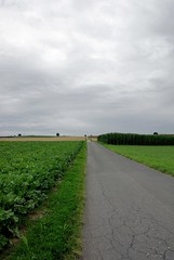 Road to nowhere (Stephi 2006) Tags: tree corn nothing sugarbeet