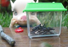 The birds and the bees...and beetles1 (annesstuff) Tags: piggy miniature bjd rement beetles abjd balljointeddoll elfdoll asianballjointeddoll 16scale dollhouseminiature charlesstephan alicecherryblossom animalbjd anthrobjd annesstuff anthroballjointeddoll