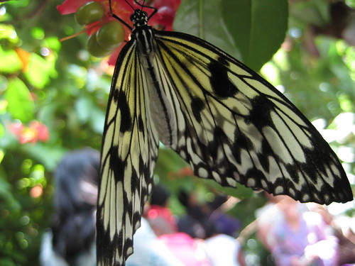 Butterfly Garden 073