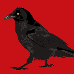 Black crow (laura@popdesign) Tags: red black art animals illustration wildlife pop crow vector animalart vectorialillustration