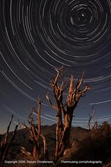 Bristlecone Pine Star Trail