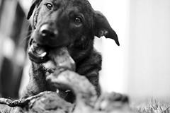 2009.09.11 -- Dog Log