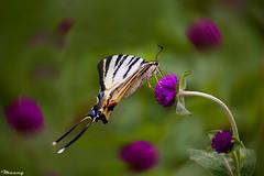 Sufi Whirling! (M@@n) Tags: blur flower macro butterfly iran pentax bokeh mazandaran  sufi whirling   babolsar   k100d   theunforgettablepictures  platinumheartaward     pentaxart