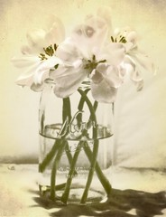 Tulip Trio (luvpublishing) Tags: pink flowers texture nature floral vintage three tulips overlay layer glassjar picnik tabletop kerr pinkflowers fauxvintage cutflowers tuliptrio artistictreasurechest imagofabulae