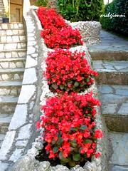 fiori in curva (archgionni) Tags: flowers red home casa stair colours stones pietre scala fiori rosso colori