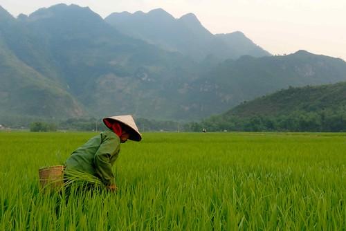 Foto Vietnam - Vietnam d'Elite