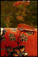 Autumn (seyed mostafa zamani) Tags: autumn color art beautiful carpet nice kiss colorful sweet dreams lone civilization dear islamic پاييز رنگ عشق هنر خاطره فرش ناز فرهنگ رنگارنگ شرقي تمدن ايوان مرند اذربايجان تراختور