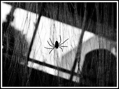 spider silhouette in B&W
