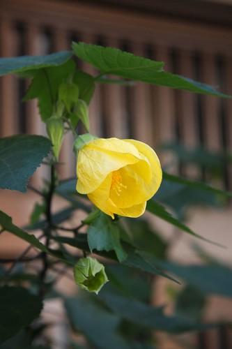 可憐な花 A pretty flower