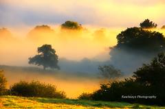 Bruma entre los robles (Rawlways) Tags: mist fog sunrise landscape oak nikon natural asturias paisaje amanecer nebbia niebla d300 roble piloa rawlways