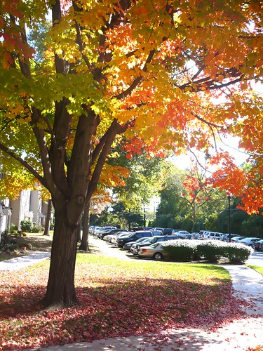Falling for Fall - Oct 21 (29)