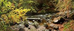 River panorama (stuant63) Tags: autumn fall river scotland perthshire hermitage nts braan nationaltrustforscotland stuant63 stuartanthony decs241009